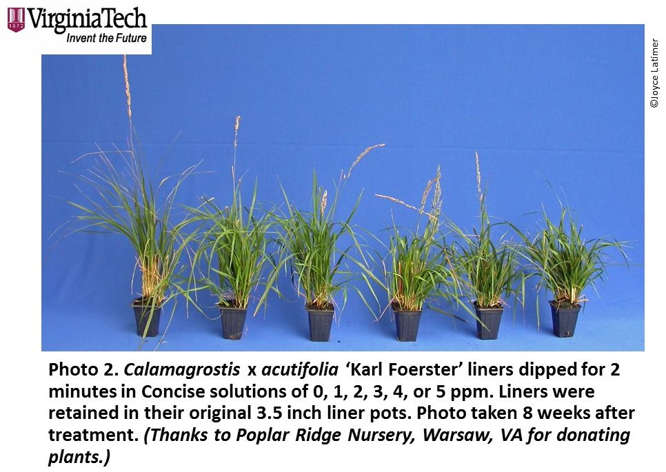 Photo 2_PP59 Calamagrostis 8WAT Concise Liner 0 1 2 3 4 5 ppm2