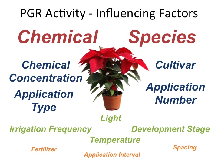 Figure 1. Numerous cultural and environmental factors affect the efficacy of a plant growth regulator application. These must be taken into account when you are determining the rate to use on your crop.